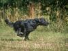 kk-dogfotos_WD4_4206_Original-priv.-Nutzung-_1208215